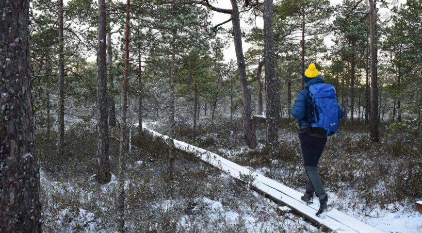 The wood life: my four days immersed in Latvia's forests